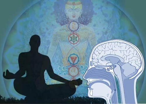 how does meditation affects the human brain